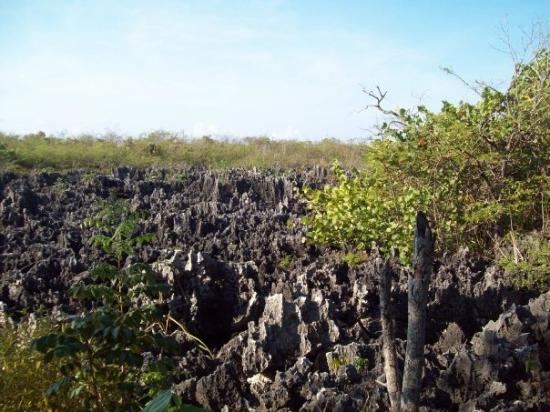Hell: Remains of a old reef bed that use to be under water