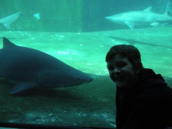 Pittsburgh Zoo & PPG Aquarium: Ethan loved the shark tunnel where they are swimming all around you even over your head.