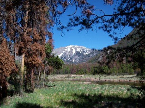 Bowen Gulch Trail