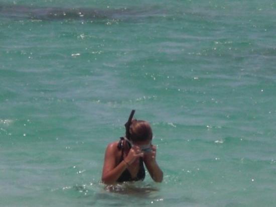 Sainte-Anne, กวาเดอลูป: n'a rien pêché... peur d'attraper les gros crabes