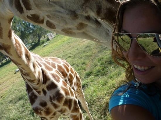 Zoologico Guadalajara: Que linda jirafa!!! casi me da un beso