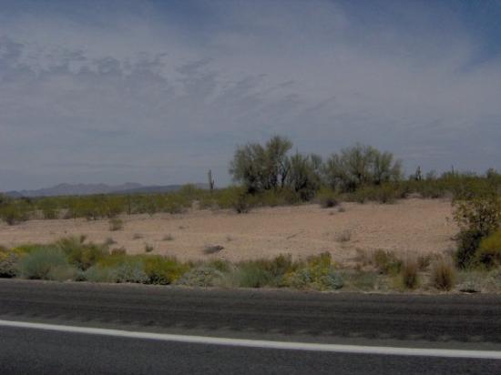 Phoenix Foto