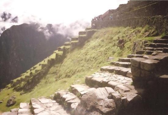 Os Andenes De Cultivo Inca Fotografía De Machu Picchu