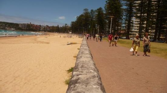 Manly, ออสเตรเลีย: Wanted a sort of half shot of land with trees and beach with water.