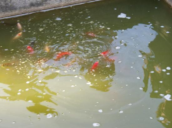 The Stone House B&B: A fish pond in the garden!