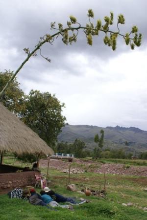 Querumarca near San Pablo, Peru