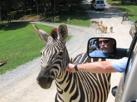 Safari In Va >> Xebra Picture Of Virginia Safari Park Natural Bridge Tripadvisor