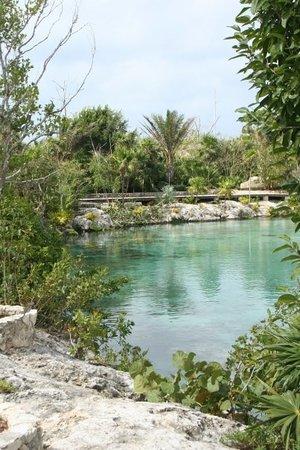 Isla Mujeres, Mexico: Lagoon in the garden