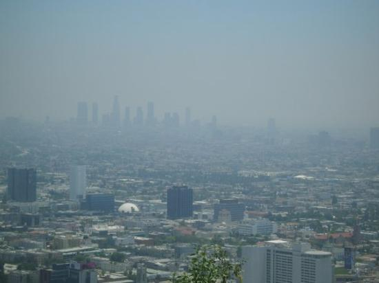 Standard Downtown: I love L.A. To live and die in L.A.