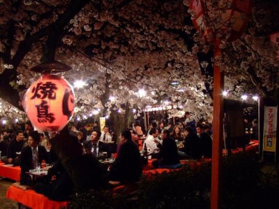 กิอง: Gion Cherry blossom festval