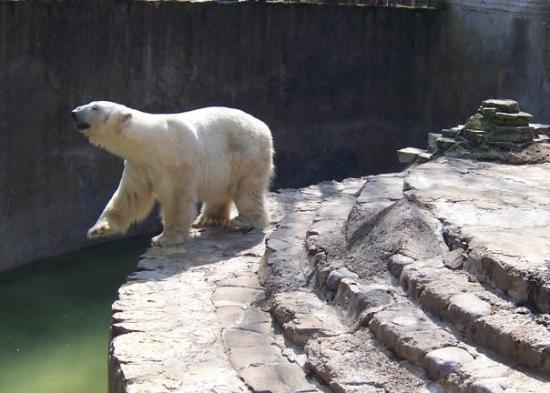 เคานาส, ลิทัวเนีย: Kaunas, Lithuania Zoo