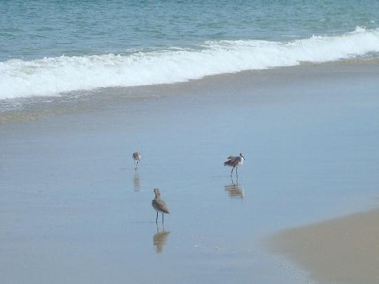 龜礁俱樂部渡假村照片