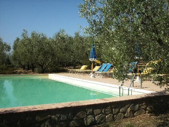 Agriturismo Spazzavento : the sunny swimming pool