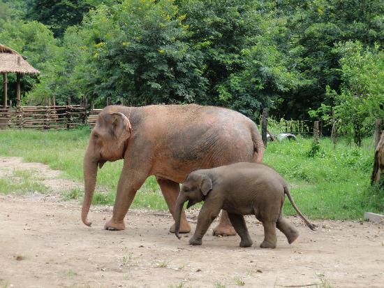 大象自然保护公园
