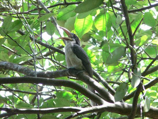 Khao Yai Garden Lodge: bird watcher
