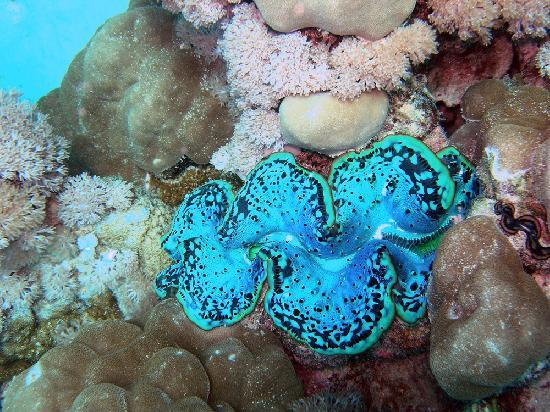 Sudan Red Sea Resort : underwater nice colors during the diving session