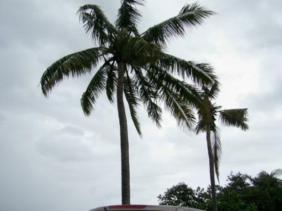 ดิลี , ติมอร์ตะวันออก: costa de Dili
