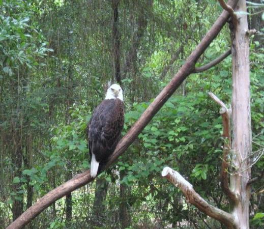 Tallahassee Museum: Nice Birdy ... Florida Everglades