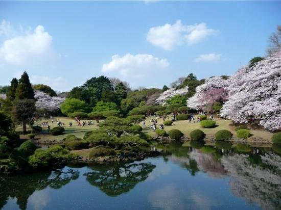 Shinjuku Gyoen National Garden : Shinjuku park