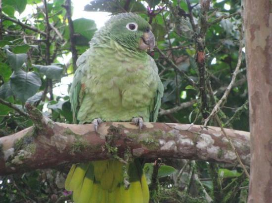Puyo, Ισημερινός: Macas, Ekuador