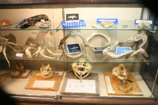 Aquarium of the National Marine Fisheries: A case with jaws of various sizes.