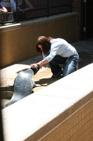Aquarium of the National Marine Fisheries : Feedings for the seals can be enjoyable for kids.