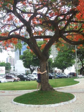 อารากาจู: Aracaju, State of Sergipe, Brasil