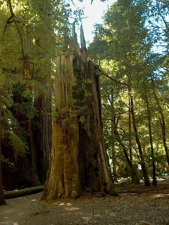 Boulder Creek, Kaliforniya: Big Basin Redwoods State Park