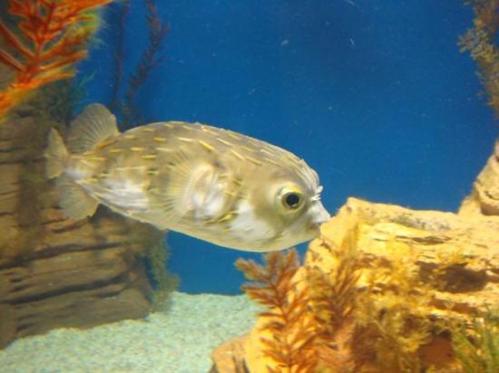 SEA LIFE Melbourne Aquarium: Tony