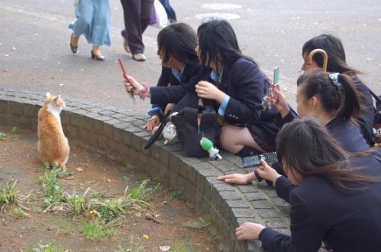 """Tokio, Japón: les japonaise sont fan danimaux s'n est flipant, a ce moment la  ya eu une efusion de """"KAWAIIII"""""""