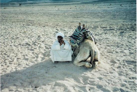 Mount Sinai: CAMEL IN EGYPT