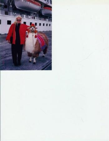 Punta Arenas, Chile: WITH LLAMA IN CHILI