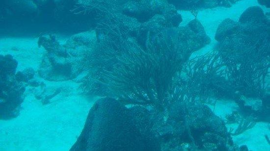 De Palm Tours ภาพถ่าย