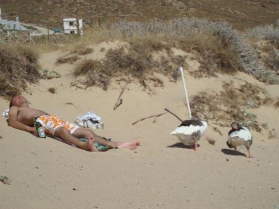 Mykonos, Grecia: tipi mbricachi che dormono assieme ai gabbiani... vi giuro anche i gabbiani dormivano erano le 9