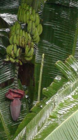 Villa di Abing: Fruit