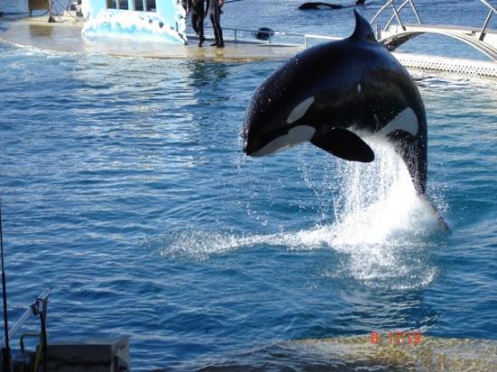 Biot, Francia: l'orc marine land