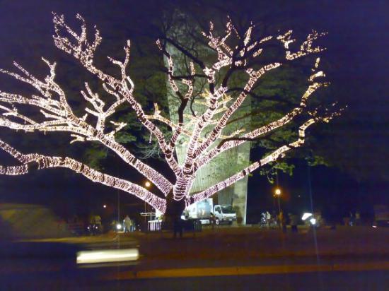 el árbol de las luces, Acarigua, VE