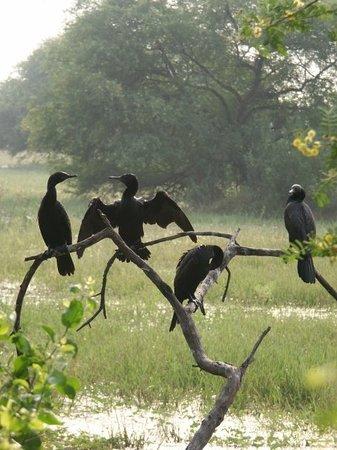 Zdjęcie Bharatpur