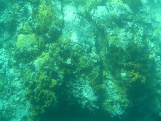 Guadeloupe: Réserve Cousteau, bateau à fond de verre.