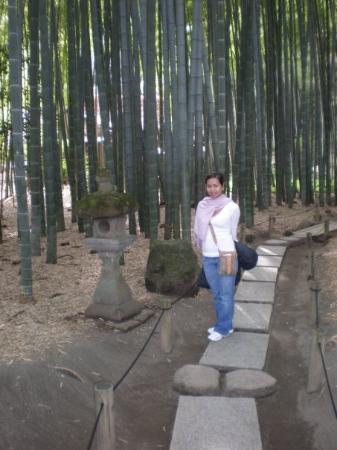 Hokaiji Temple: Hokokuji Temple (Bamboo Garden)