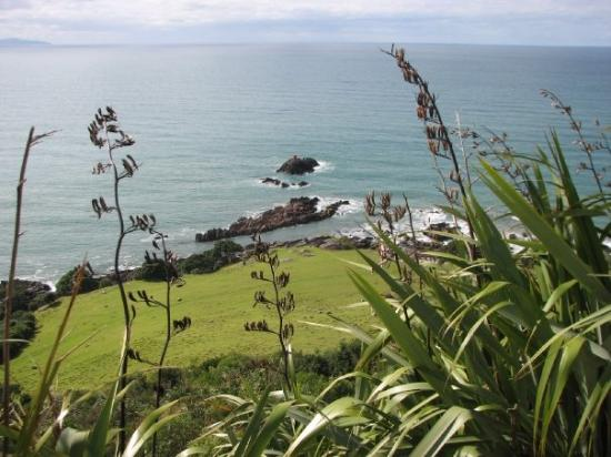 Maunganui Beach: More views from the Mount