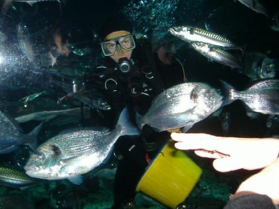 SEA LIFE London Aquarium: Feeding the fish.