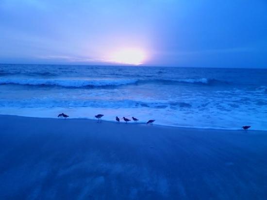 เบรเดนตันบีช, ฟลอริด้า: Birds at sunset... Bradenton Beach