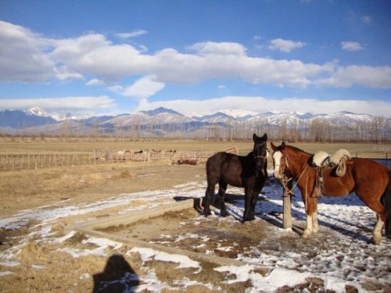 Tupungato, Argentyna: Los caballos, a la orden