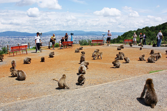 Monkey Park Iwatayama Photo