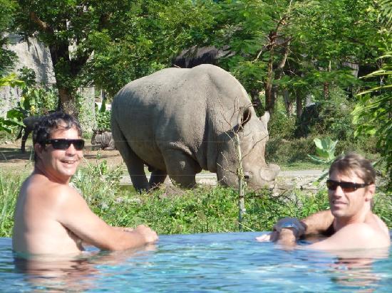 Mara River Safari Lodge: view from pool