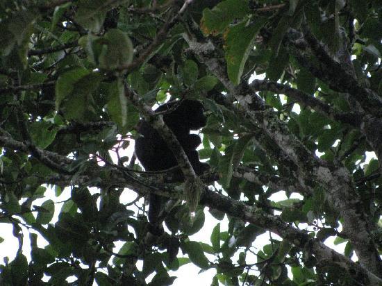 Hotel Vista de Olas: Monkey