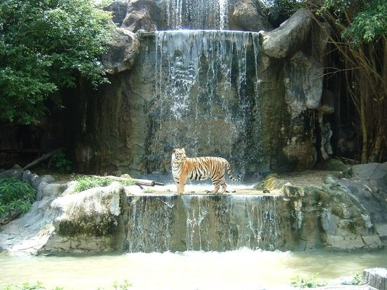 Chonburi, Thailandia: Green Mountain International Zoo, Thailand, 2007 - This is my favorite picture I've ever taken.
