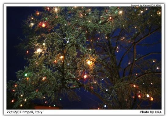 Έμπολι, Ιταλία: Nice tree