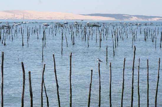 La Maison du Bassin: oyster beds